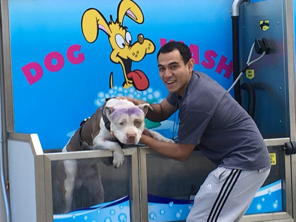 Dog Wash Pitbull